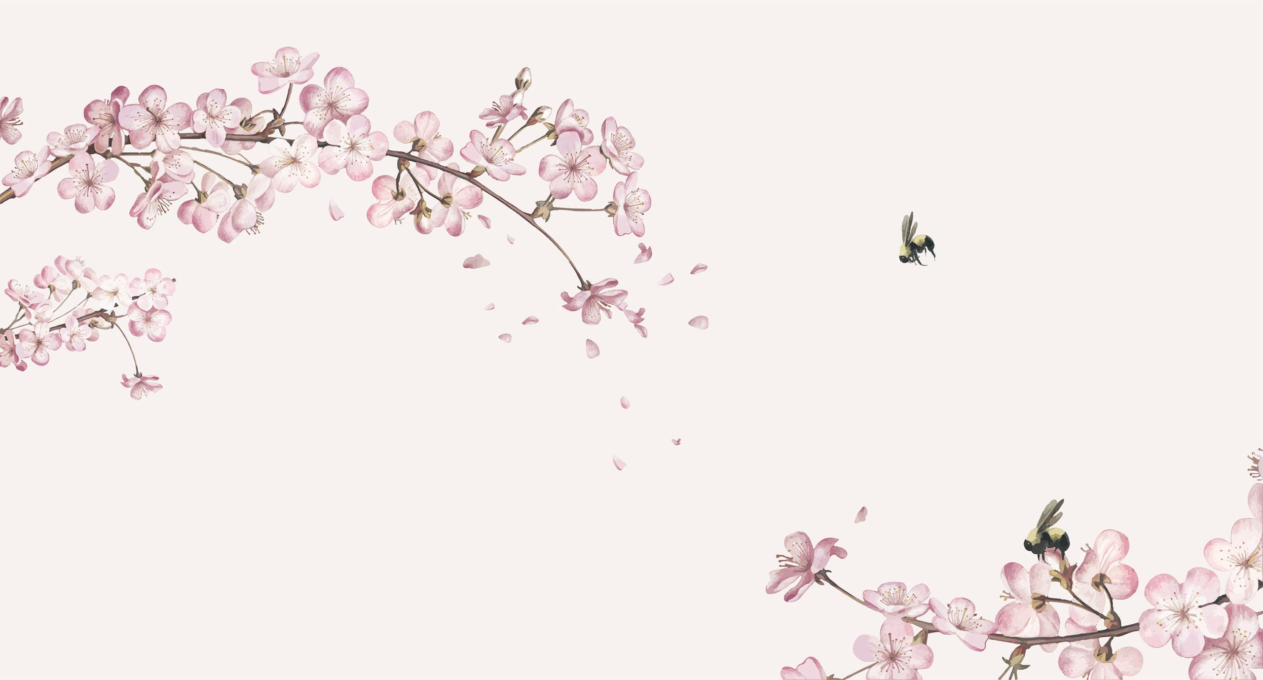 Japanse kersenbloesem